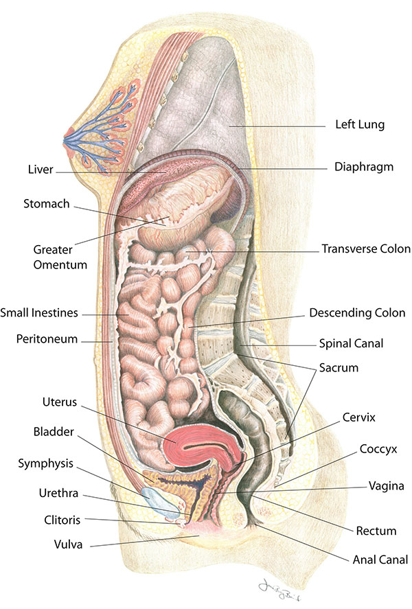 Your Body throughout Pregnancy